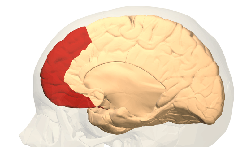 Know Your Brain: The Prefrontal Cortex - Step Change Learning